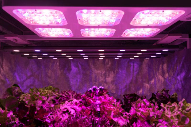 plants underneath grow lights